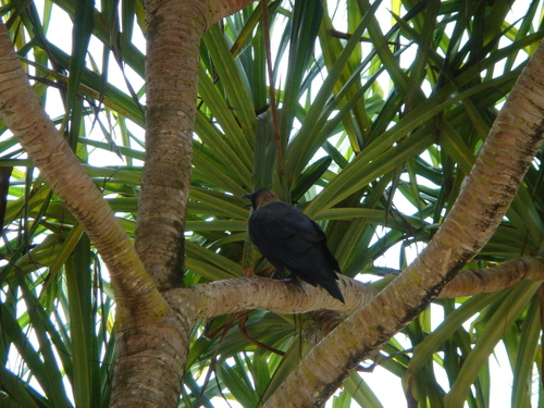 Zanzibar_bird_in_tree