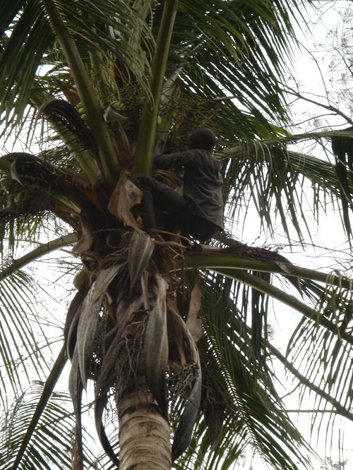 Zanzibar_spices_child_in_coconut_tree
